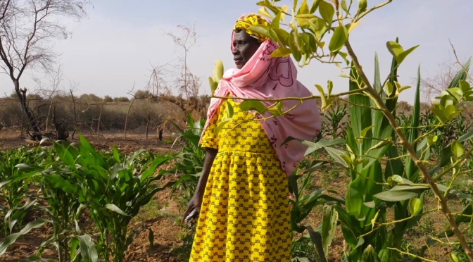 The energy to stay: Senegal's village of women In northeast Senegal, the Sahara Desert is encroaching and the men are emigrating. But a group of women have pooled their resources and sought out new farming methods to save their villages.